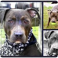 Adopt A Pet :: Eerie - Sylvania, OH