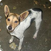 Adopt A Pet :: clark - Henderson, KY