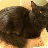 Adopt A Pet :: Clover - Berkeley Hts, NJ