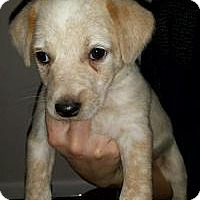 Adopt A Pet :: Baby Ruby - Marlton, NJ