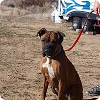 Adopt A Pet :: Kyrynn - Reno, NV