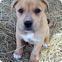 Adopt A Pet :: Samson - Waller, TX