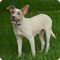 Adopt A Pet :: Pippy - Charlemont, MA