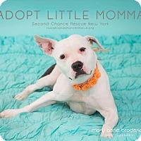 Adopt A Pet :: Momma - Whitestone, NY