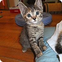 Adopt A Pet :: Chloe - Norwich, NY