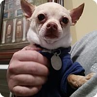 Adopt A Pet :: Charlie Weasley - Huntsville, AL