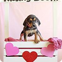 Adopt A Pet :: Elaine - Waldorf, MD