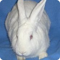 Adopt A Pet :: Meg - Woburn, MA