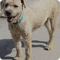 Adopt A Pet :: Clive - Woonsocket, RI