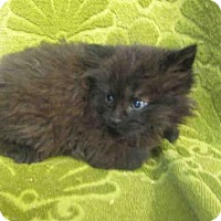 Adopt A Pet :: *REGULUS - Upper Marlboro, MD