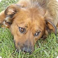 Adopt A Pet :: Hobbs - Oxford, MS