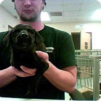 Adopt A Pet :: PAXTON - Conroe, TX