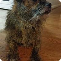 Adopt A Pet :: Racket - Alexandria, VA