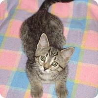 Adopt A Pet :: Sally - Woodstock, ON