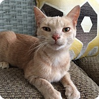 Adopt A Pet :: Darwin - Toledo, OH
