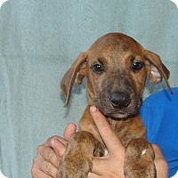 Adopt A Pet :: Tess - Oviedo, FL