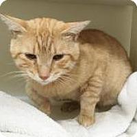 Adopt A Pet :: Cranmore - Salisbury, MA