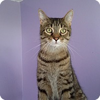 Adopt A Pet :: Tom - Port Clinton, OH