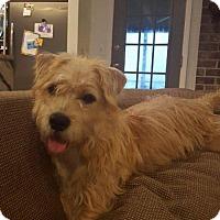 Adopt A Pet :: MATTHEW ~ SURVIVOR - Hanover, PA