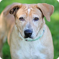 Adopt A Pet :: Molly - Midland, MI