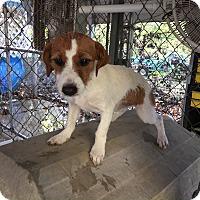 Adopt A Pet :: Kiwi - Hohenwald, TN