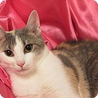 Adopt A Pet :: Lynne - St. Louis, MO