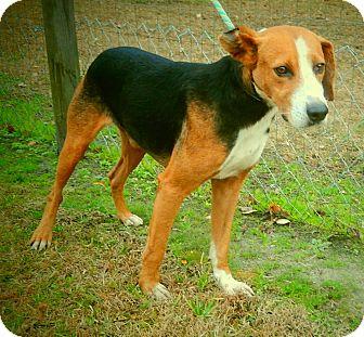 Hound (Unknown Type) Mix Dog for adoption in Newport, North Carolina - Hudson