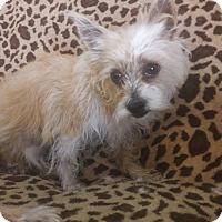 Adopt A Pet :: Louise - Las Vegas, NV