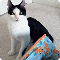 Adopt A Pet :: .Oliver - Ellicott City, MD