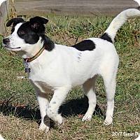 Adopt A Pet :: Dancer - Bedford, VA