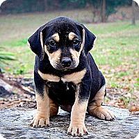Adopt A Pet :: Eve - Seabrook, NH
