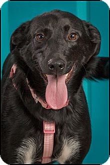 Labrador Retriever Mix Dog for adoption in Owensboro, Kentucky - Willow
