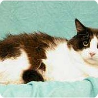 Adopt A Pet :: Buster - Sacramento, CA