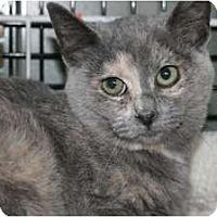 Adopt A Pet :: Carol - Frederick, MD
