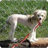Adopt A Pet :: Dew Drop - Meridian, ID