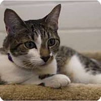 Adopt A Pet :: Ruby - New Port Richey, FL