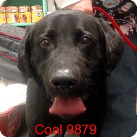 Adopt A Pet :: Coal - baltimore, MD