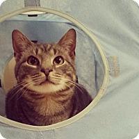 Adopt A Pet :: Moon Shadow - Turnersville, NJ