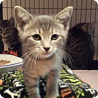 Adopt A Pet :: Illume - Lawrenceville, GA