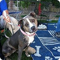 Adopt A Pet :: KHLOE - Chandler, AZ