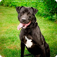 Adopt A Pet :: Tucker D-61017  *In Foster * *Pooch with Perks* - Westampton, NJ