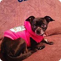 Adopt A Pet :: ozzie - grayslake, IL