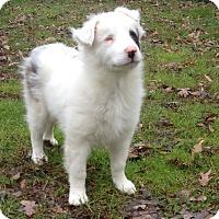 Adopt A Pet :: Mystic, special needs baby - Snohomish, WA