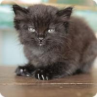 Adopt A Pet :: Frisco - San Antonio, TX