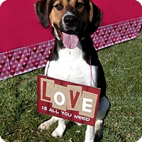 Adopt A Pet :: JEBB - New Cumberland, WV