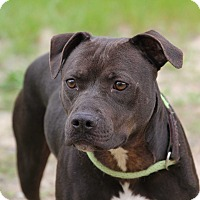 Adopt A Pet :: Jett - Macon, GA