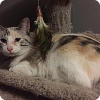 Adopt A Pet :: Dakota - Rancho Cucamonga, CA