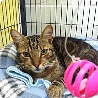 Adopt A Pet :: Peanut - Barnwell, SC
