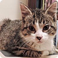 Adopt A Pet :: Daisy - Troy, MI