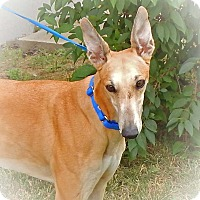 Adopt A Pet :: CeCe - Florence, KY